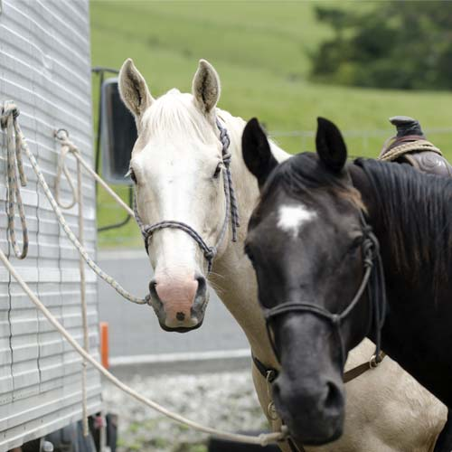 Protect your horses with MegaHitch Lock